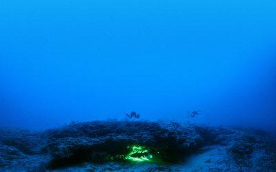 «Le Cœlacanthe, plongée vers nos origines»