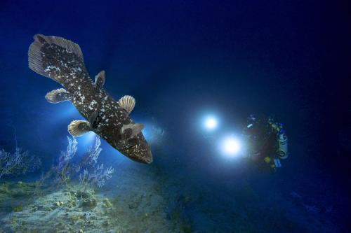 Kraken Plongée Cœlacanthe