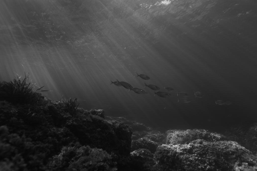 Kraken Plongée nomade