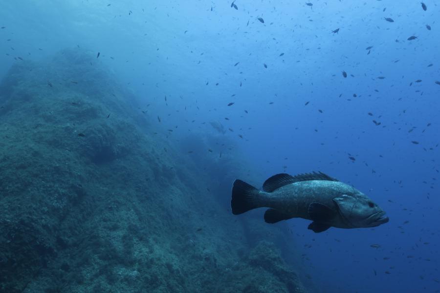 Kraken Plongée mérou Port-Cros