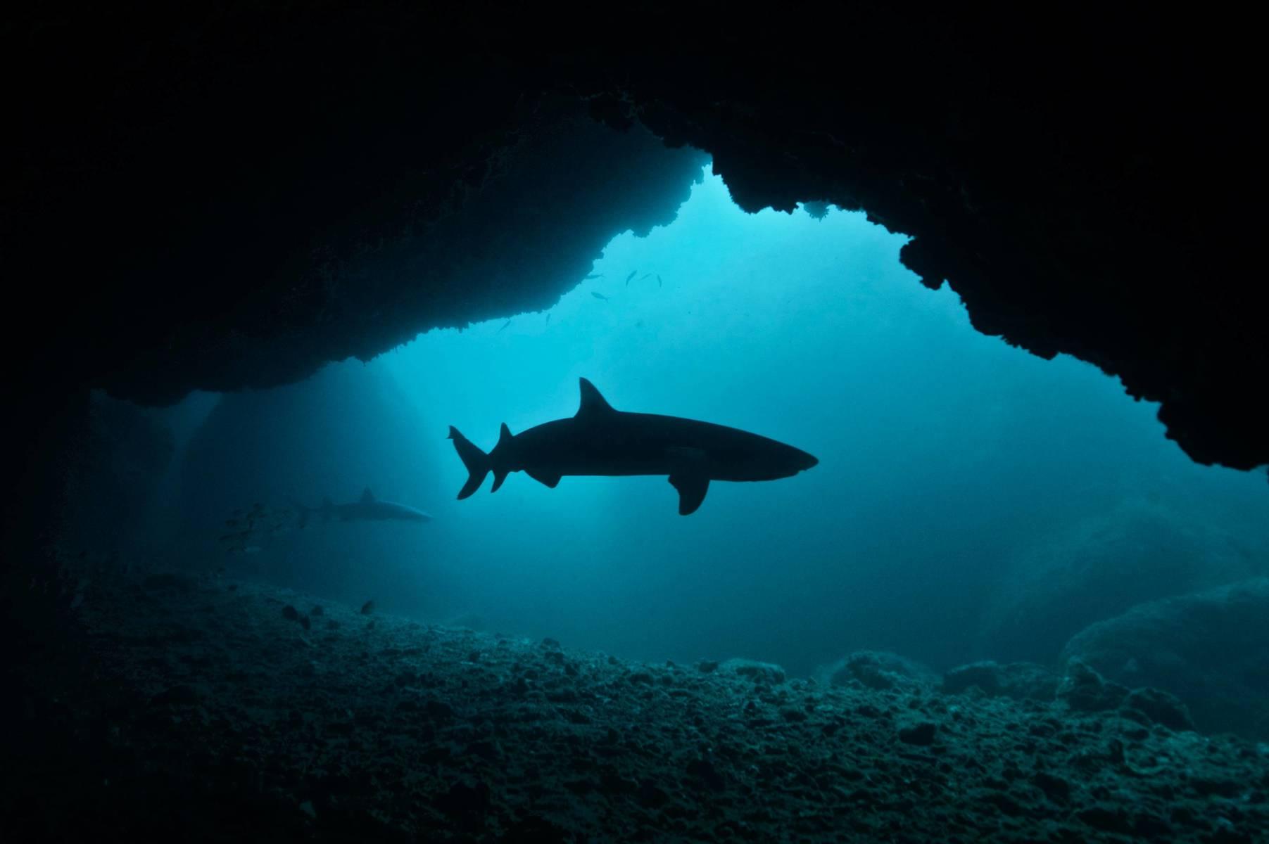 Kraken Plongée safari Philippines